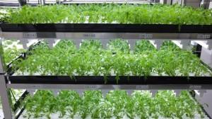 2642066_toshiba-lettuce-shelves