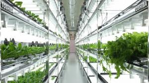 2642068_toshiba-indoor-farm